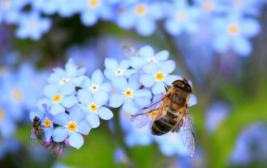 Forget me not hoverfly fly puzzle