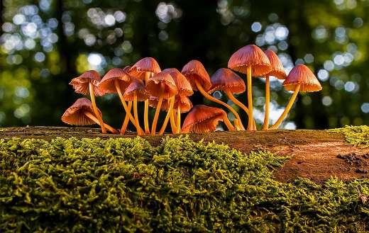 Mushrooms fungus toadstool agaric puzzle