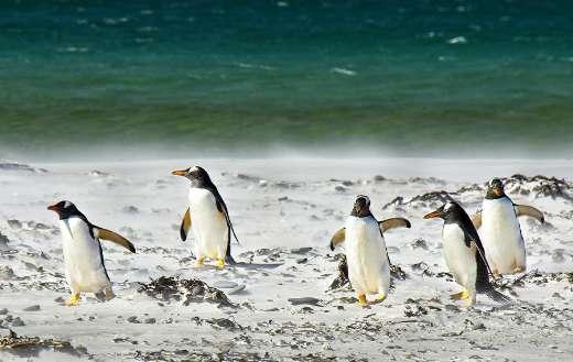 Ocean penguins colony