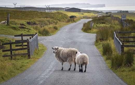 Rural farm animals livestock online