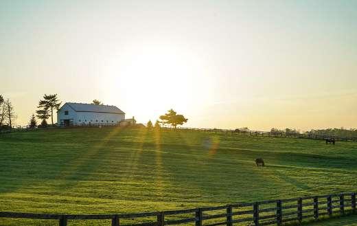 White house beside grass field farm