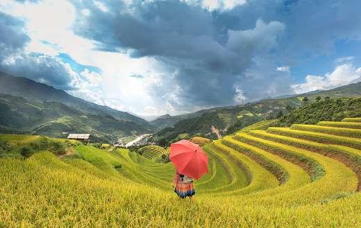 Woman under umbrella on the rice field
