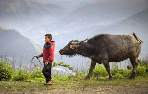 Young boy with buffalo herder