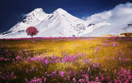 mountains alps meadow puzzle