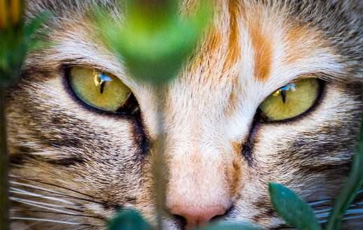 Green eye cat puzzle