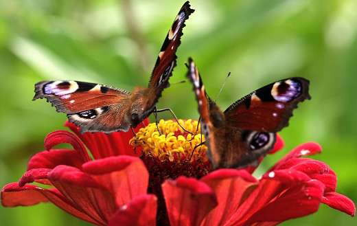Insect butterflies pollination puzzle