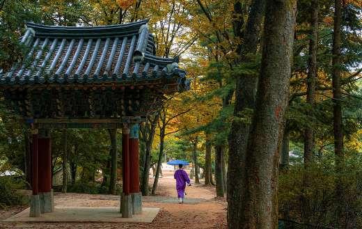 Korean folk village forest fall time