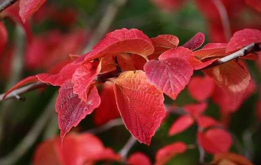 Autumn colors red foliage puzzle