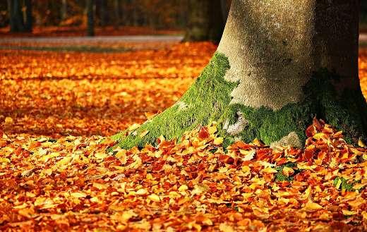 Autumn leaves foliage online