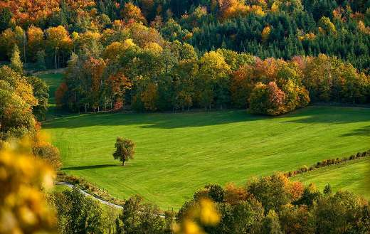 Field with autumn mood color