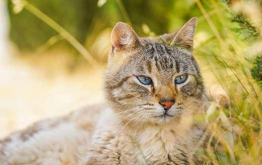 Fur cat lying online