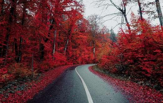 Roadway pavement countryside autumn