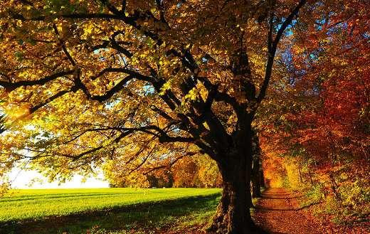 Trail path leaves autumn