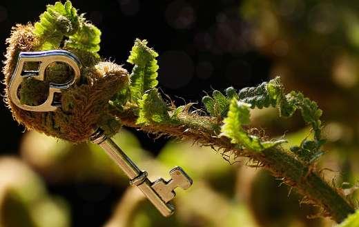 Unroll key fern puzzle